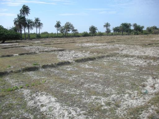 Rizière de Carabane à Casamance