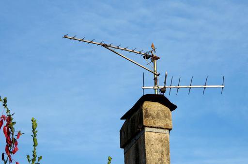 Rouge-gorge sur une antenne de télévision