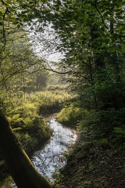 Ruisseau dans la réserve naturelle de Dülmen