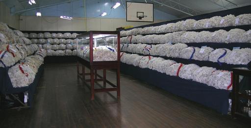Salle d'exposition de laine australienne