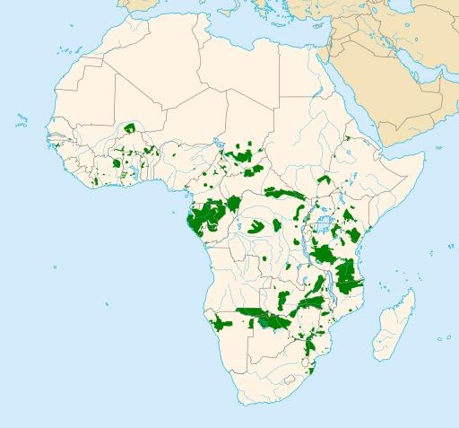 Sauvegarde des éléphants en Afrique