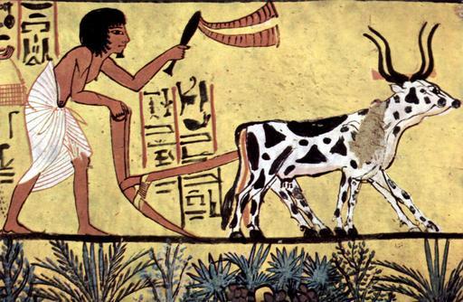 Scène de labour en Égypte