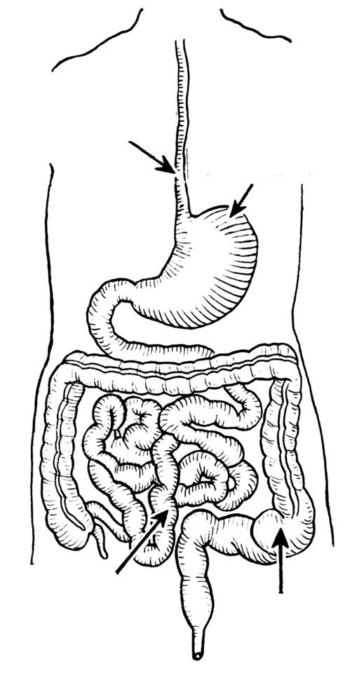 Schéma non légendé de l'appareil digestif