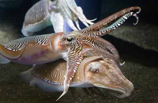 Seiches dans un aquarium