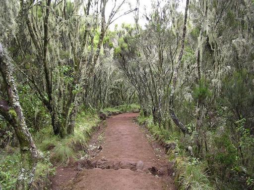 Sentier forestier de Marangu pour le Kilimandjaro