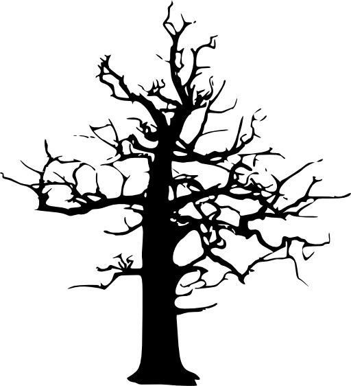 Silhouette d'arbre en hiver