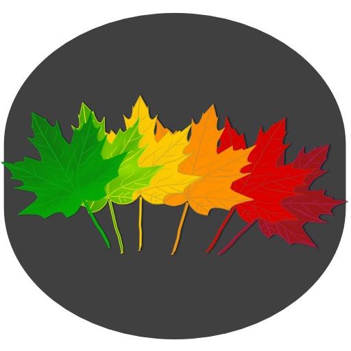 Six feuilles d'érable