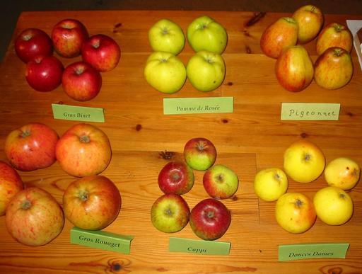 Six variétés de pommes
