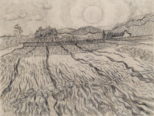 Soleil levant sur un champ de blé en hiver