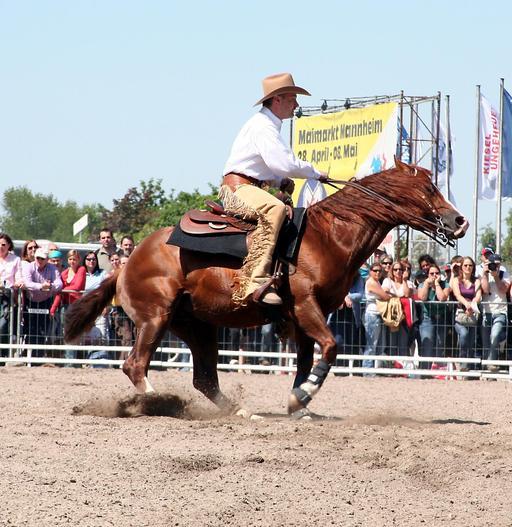 Spin d'un cheval
