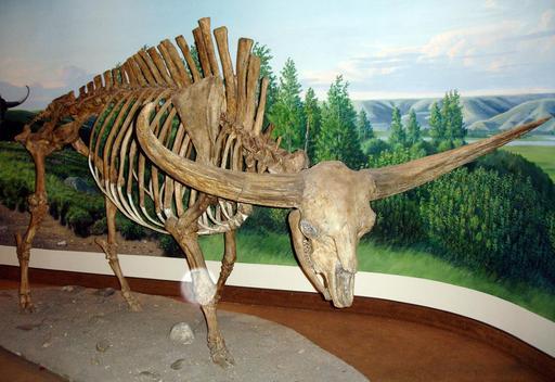 Squelette de bison géant