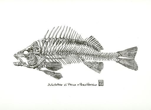 Squelette de poisson du Golfe Persique