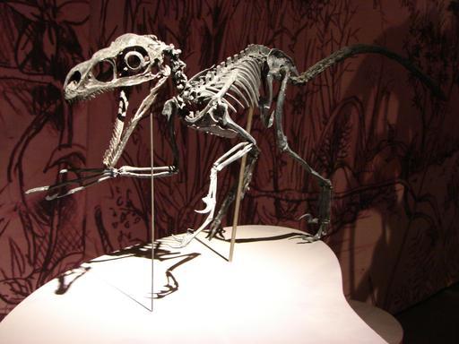 Squelette de raptor