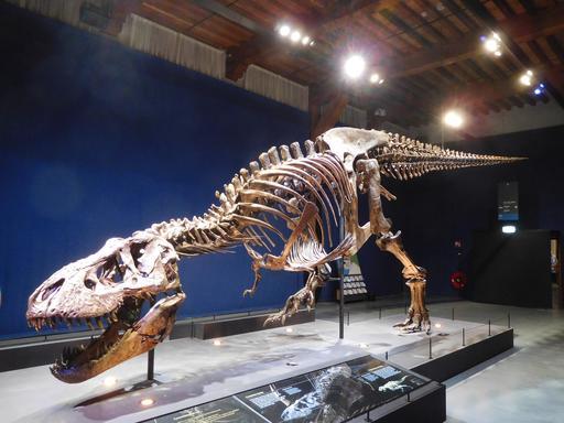 Squelette de tyrannosaure