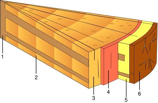 Structure du bois
