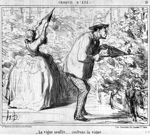 Sulfatage de la vigne en 1857