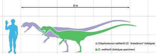 Taille du Dilophosaurus