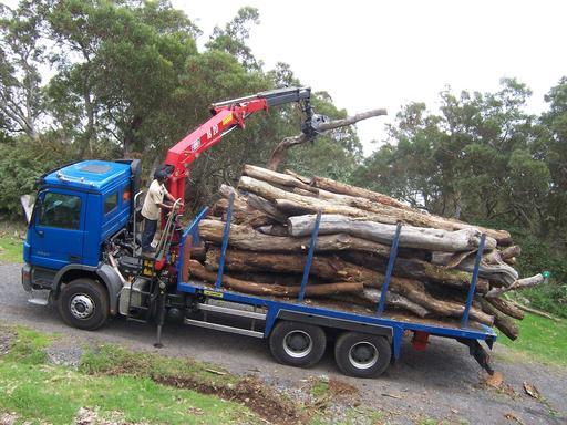 Transport de troncs de tamarin
