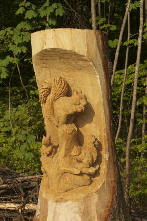 Trois écureuils dans un arbre