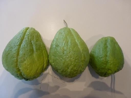 Trois fruits mûrs de christophine