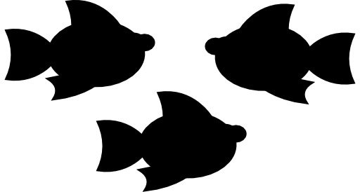 Trois poissons d'aquarium