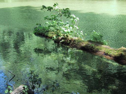Tronc mort sur une rivière