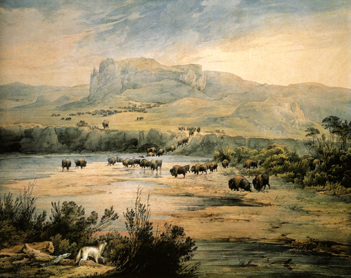 Troupeau de bisons en 1833
