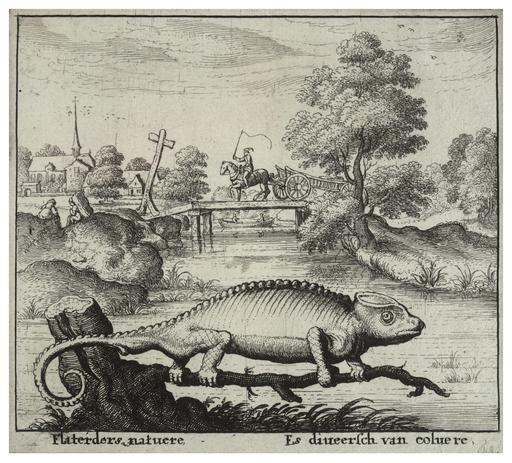 Un caméléon