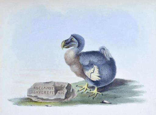 Un Dodo en 1626