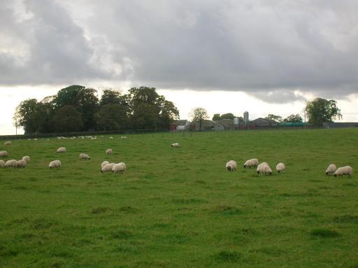 Une ferme en Écosse