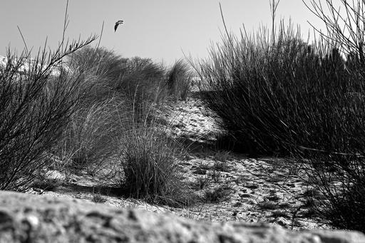 Végétation de dunes océanes