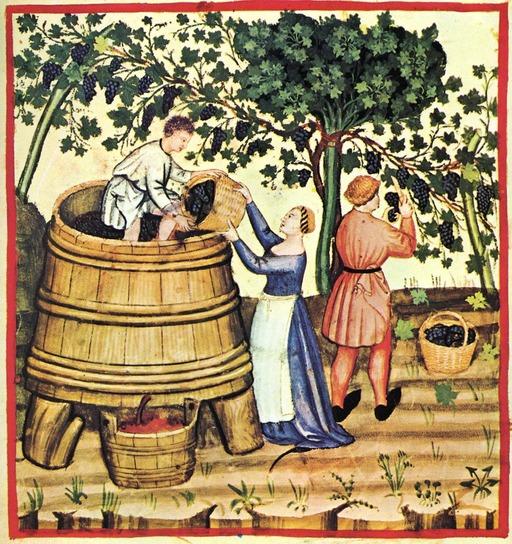 Vendanges d'automne au Moyen Age