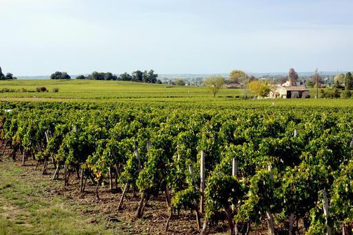 Vignes de St Emilion