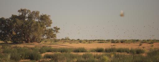 Vol de criquets pélerin