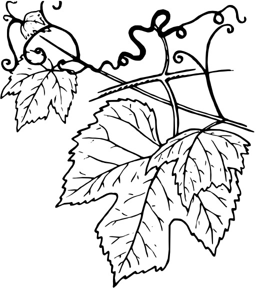 Ressources ducatives libres les for Vine and branches coloring page