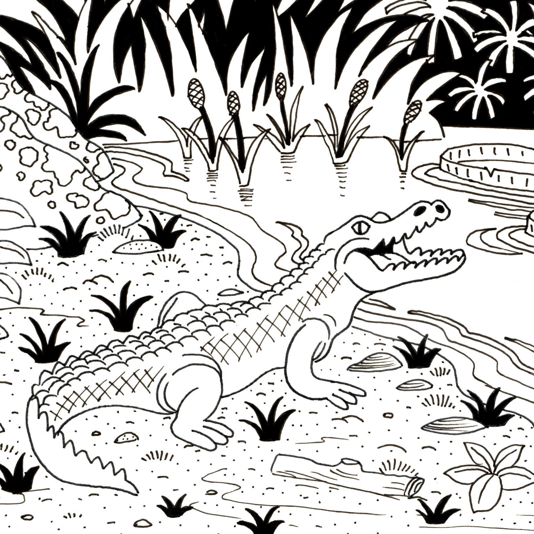 Ressources ducatives libres les ressources libres du projet abul du - Crocodile en dessin ...