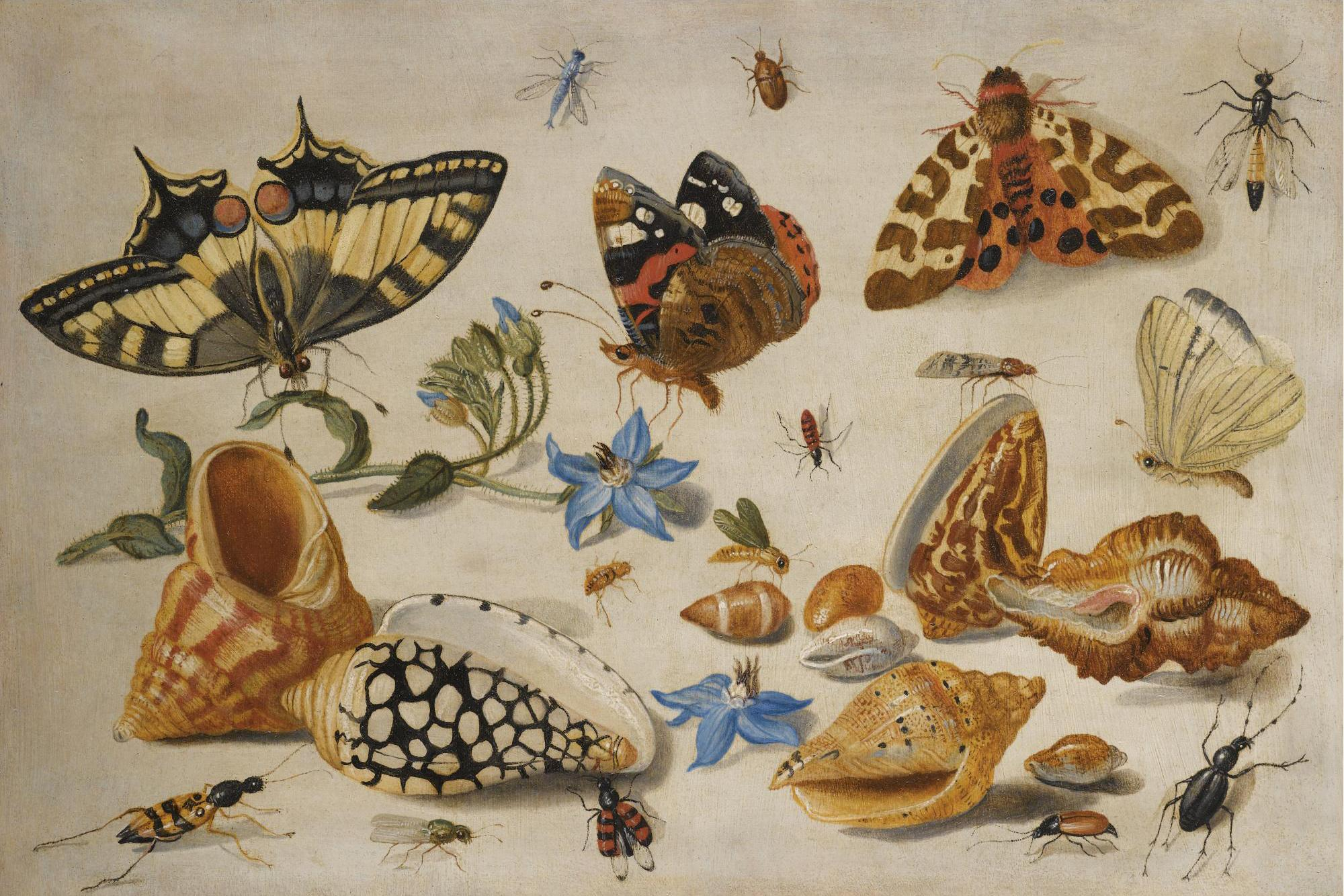 insectes appelés gendarmes