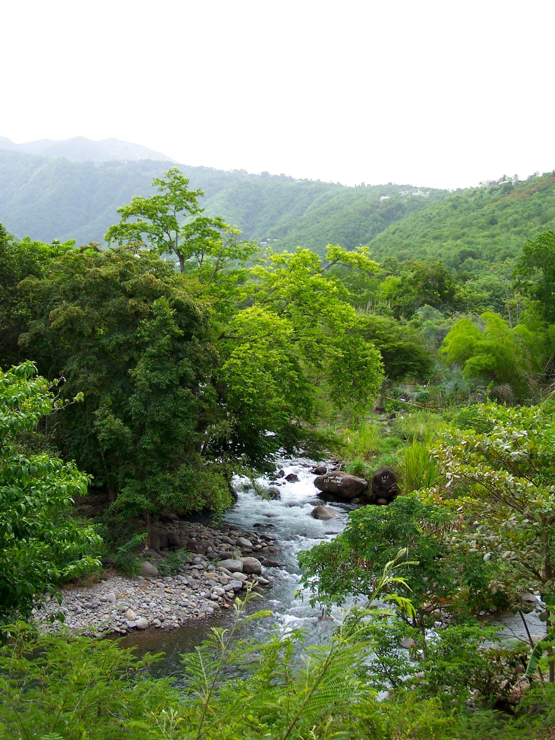 Vue de la Grande Rivière des Vieux-Habitants en aval du lieu-dit de Schœlcher, en Guadeloupe