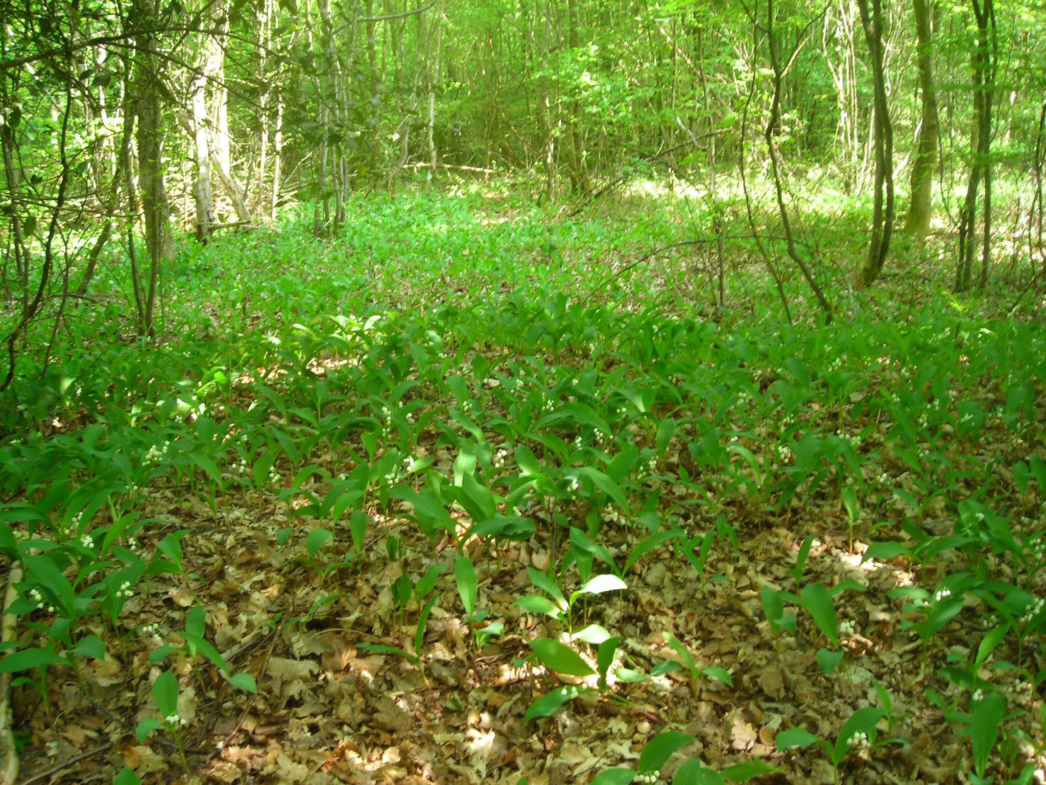 Ressources ducatives libres les ressources libres du projet abul du - Un matin dans les bois ...