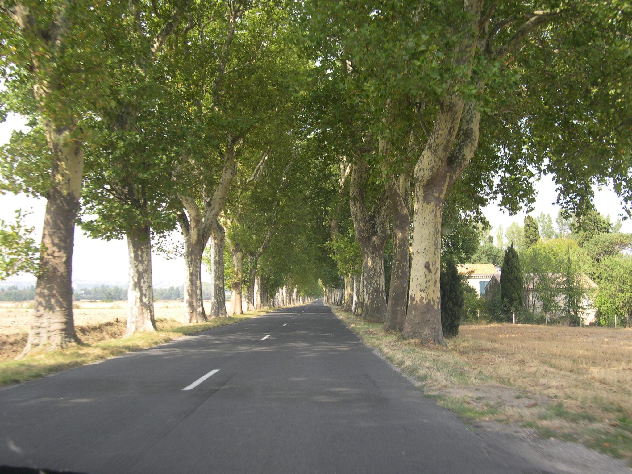 Photo d'une route départementale française bordée de platanes, près de Castelnaudary.